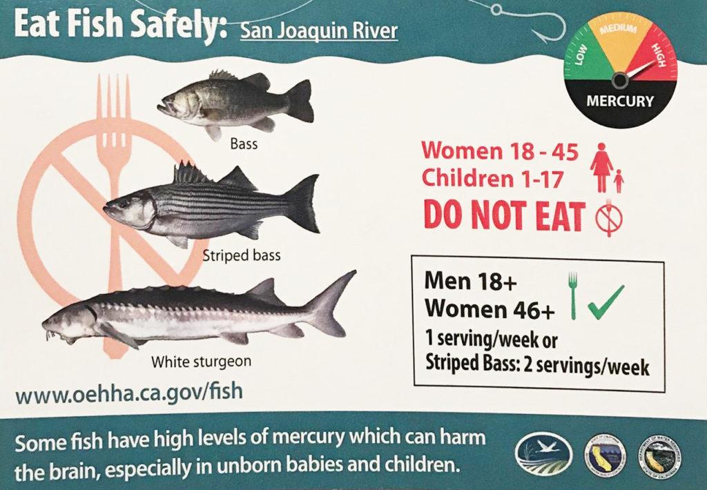 fishsafety copy